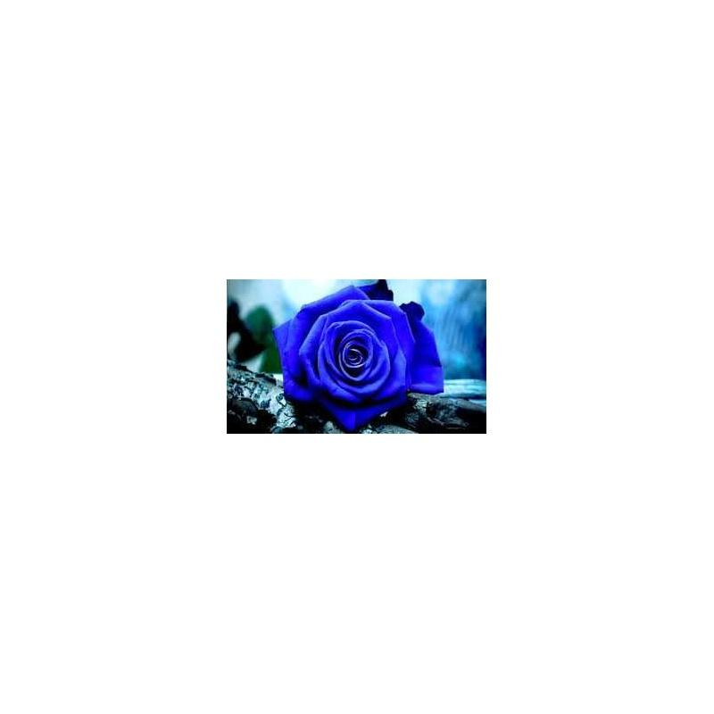 ROSA ETERNA COLOR AZUL OSCURO 22.5 cm