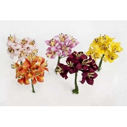 Bolsa 12 pomos 6 flores 5 pétalos surtidos